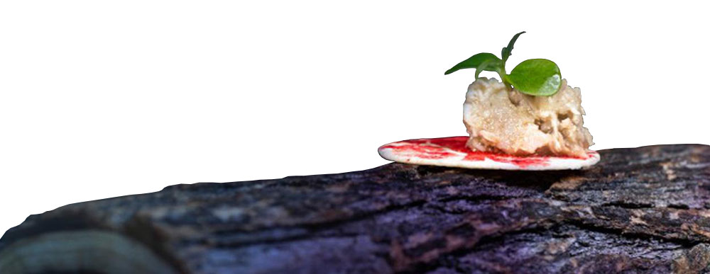 Eat well in Malaga - Michellin star