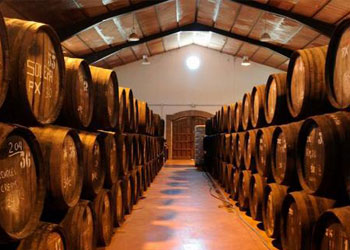 wines malaga-best wineries