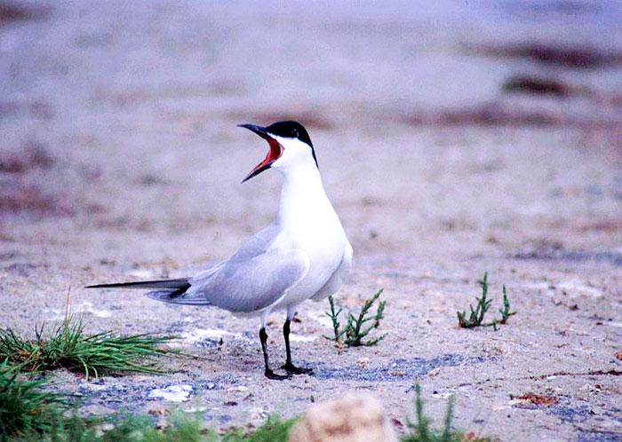 Birdwatching en Málaga Fuente de Piedra