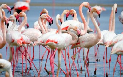 Laguna Fuente de Piedra, a birdwatching paradise