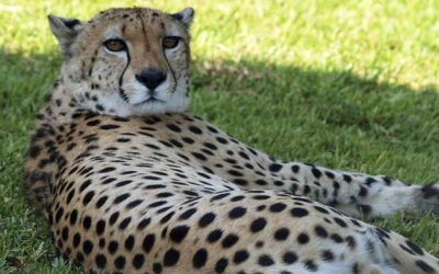 The best zoos in malaga